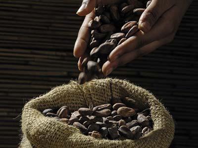 Cacao e i benefici nel ciclismo, Moretti Bassano